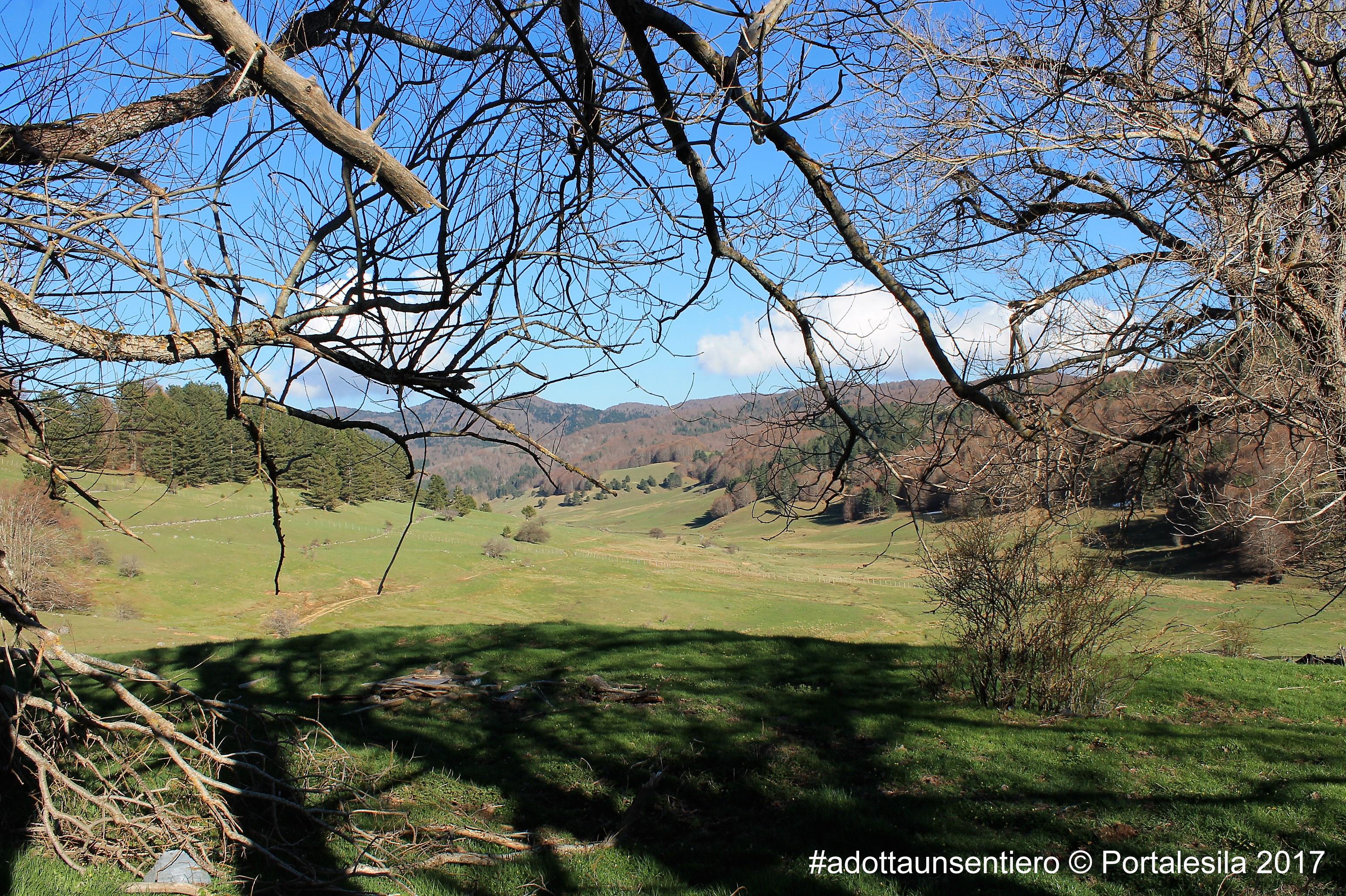 Vista panoramica dalla vaccheria alta con alberi secolari