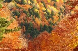 """Trekking fotografico """"Foliage in Sila"""""""