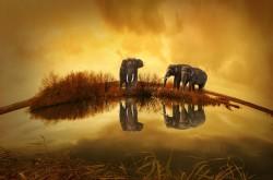 Ultime sull'Elefante silano
