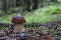 Funghi, che passione!